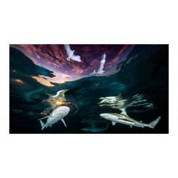 Renee Capozzola - 2021 Underwater Photographer of the Yearp