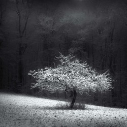 Harald Weimann - Furth Odenwald Germany_ph_land_bw_http!++photo-weimann.de