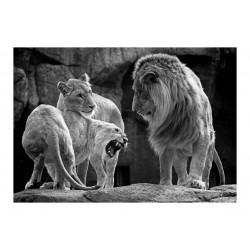 Goncalo Lobo Pinheiro - Lions_ph_bw_anim