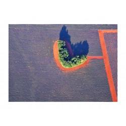 Magali CHESNEL - Coeur de lavande Ailes varoises_ph_land