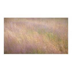 Steven Keller - Summer Grass