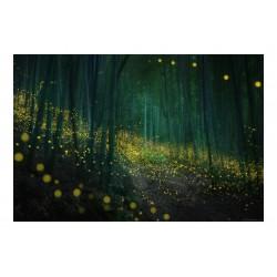 Daniel Kordan -  Japan Fireflies - 2019