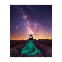 Gary Cummins - My queen in her lavender dream