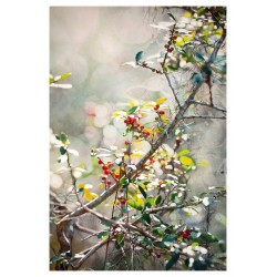 Xi Guo - Morning berries_pa_hype