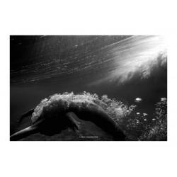 Jean Philippe Piter - Wave Series - Amandine Merlin_ph_nude_under