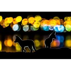 Mohammad Murad - Colorful Night_ph_anim_mohammadmurad.com