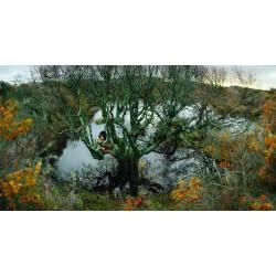 Ellen Kooi - Langerak - blauwe boom