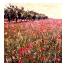 Elizabeth Opalenik - poppies - polaroid SX GEMS