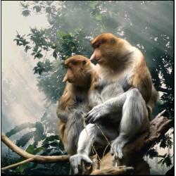 Frank Horvat -Bestiary - proboscis monkeys - 1994_ph_mast_anim