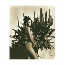 Herb Ritts - Carla Bruni_ph_mast_nude_bw