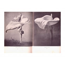 Stefan Lorant - Our Lili - Arum Lily 2_ph_vint_bw