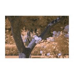 Gmunk - landscape infrared_ph_land