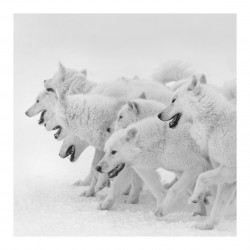 Patrick Ems - dogs_ph_bw_ani