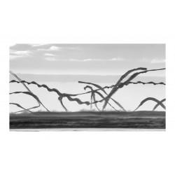 Xavi Bou - Ornitographie 3_ph_bw_land