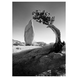 Ansel Adams - Joshua Tree Leaning Juniper and Balanced Rock_ph_mast_bw_land_vint_newconceptartphotoselling.com+blog+35539-ansel-