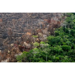 Daniel Beltra - Amazon rainforest after the fire - canopy...