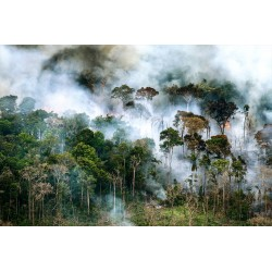 Daniel Beltra - Amazon rainforest burning - canopy east...