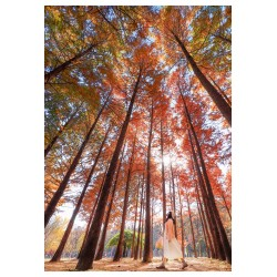 Mehmet SERT - forest in Seoul - Korea