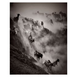 Drew Doggett - Goat herd dust desert hill running_ph_land_anim_bw