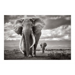 Drew Doggett - Super Tuskers of East Africa