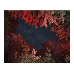 Benoit Paille - Alternatives Landscapes 5_ph_land